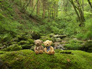 クマのルーニー 岩石園
