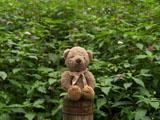 クマのルーニー ツリフネソウ