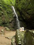 クマのルーニー 滝