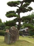 クマのルーニー 松の木
