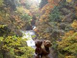 クマのルーニー 西沢渓谷 滝