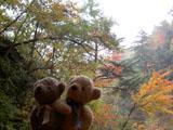 クマのルーニー 西沢渓谷