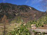 クマのルーニー 山
