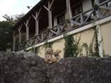 クマのルーニー 岩