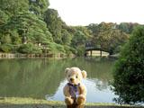 クマのルーニー 六義園 中の島田鶴橋