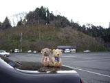 クマのルーニー 吉野山
