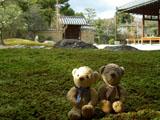クマのルーニー 芳春院 苔