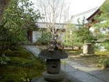 クマのルーニー 芳春院 庭