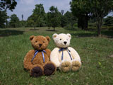 クマのルーニー Roony M
