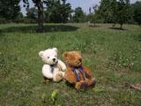 クマのルーニー Roony S