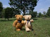 クマのルーニー Jointed Roony M