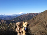 クマのルーニー 富士山
