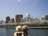 クマのルーニー 隅田川