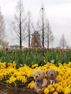 クマのルーニー チューリップと風車