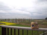 クマのルーニー 畑