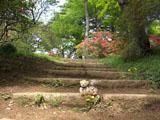 クマのルーニー 階段