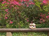 クマのルーニー ツツジとベンチ