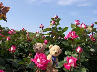 クマのルーニー バラの花 ノスタルジー