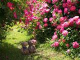 クマのルーニー バラの花