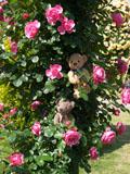 クマのルーニー バラの花 レオナルド ダ ビンチ
