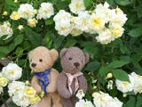 クマのルーニー バラの花 モーヴァンヒルズ