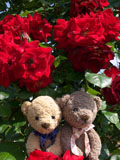 クマのルーニー バラの花 エクスプルワ
