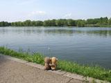 クマのルーニー 水辺