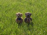 クマのルーニー 芝生