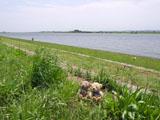 クマのルーニー 堤防と常陸利根川