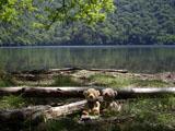 クマのルーニー 西ノ湖