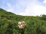 クマのルーニー 白馬連山方面