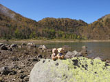 クマのルーニー 五色沼