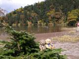 クマのルーニー 弥陀ヶ池