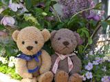 クマのルーニーとヘレボルス