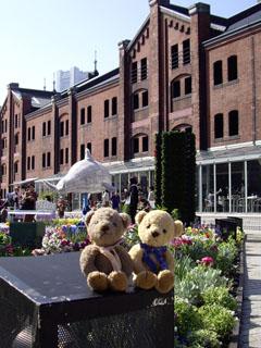 クマのルーニーと横浜赤レンガ倉庫
