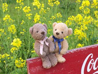 クマのルーニーとナノハナ