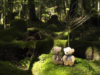 クマのルーニーと苔の絨毯