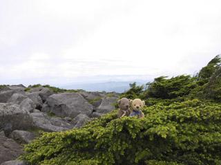 クマのルーニーと山々