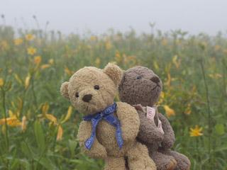 クマのルーニーとニッコウキスゲ