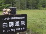 クマのルーニーと白駒湿原