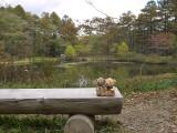 戸隠森林植物園 みどりが池