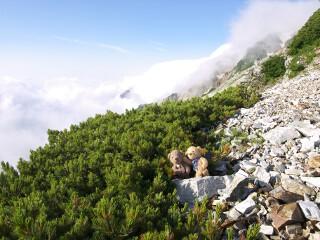 ハイマツと五竜岳