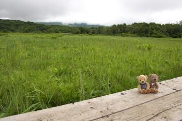 桑ノ木台湿原