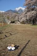 甲斐駒ケ岳と真原桜並木