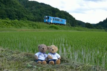 田んぼと列車