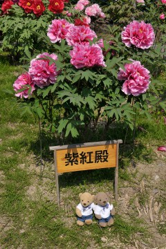 吉香牡丹園