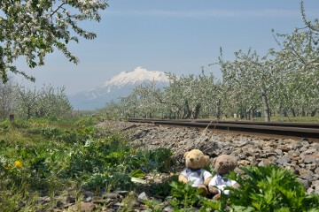 岩木山とリンゴ