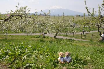 りんご公園