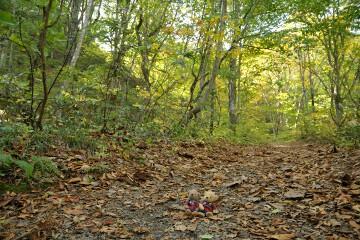 ブナ林散策道コース
