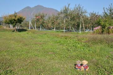 岩木山とリンゴ畑